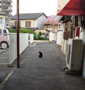 倉敷の小道とにゃんさま