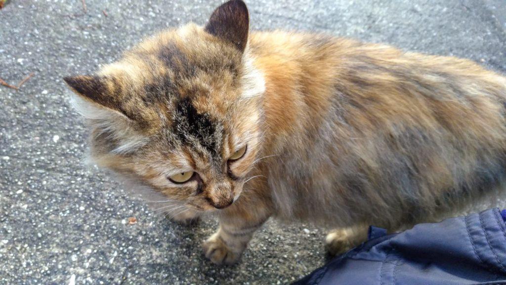 尾道の猫、もっふもふ
